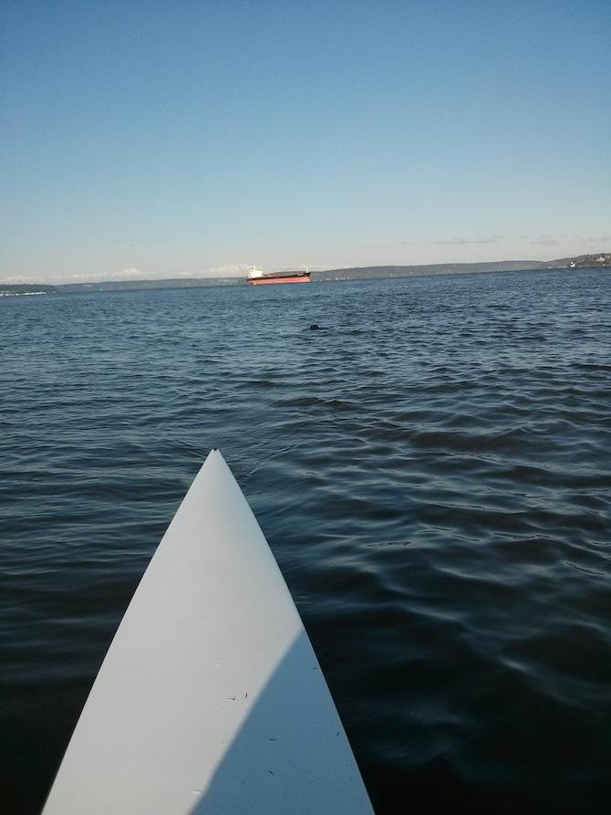 Tacoma Strength, CrossFit Tacoma, Rowing, Seals